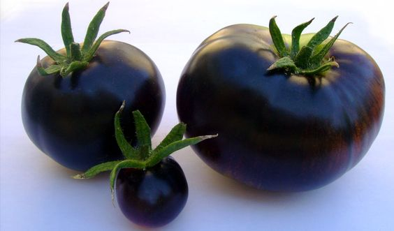 Black tomatos - natural